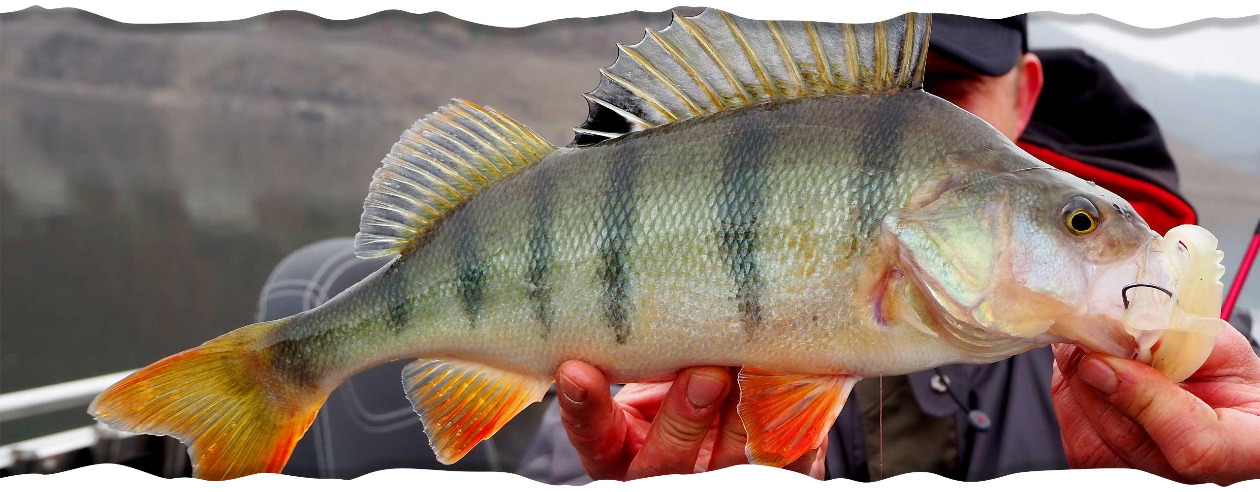 Moby Start Box